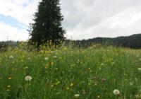 Von Wiesen, Weiden und allerlei Getier